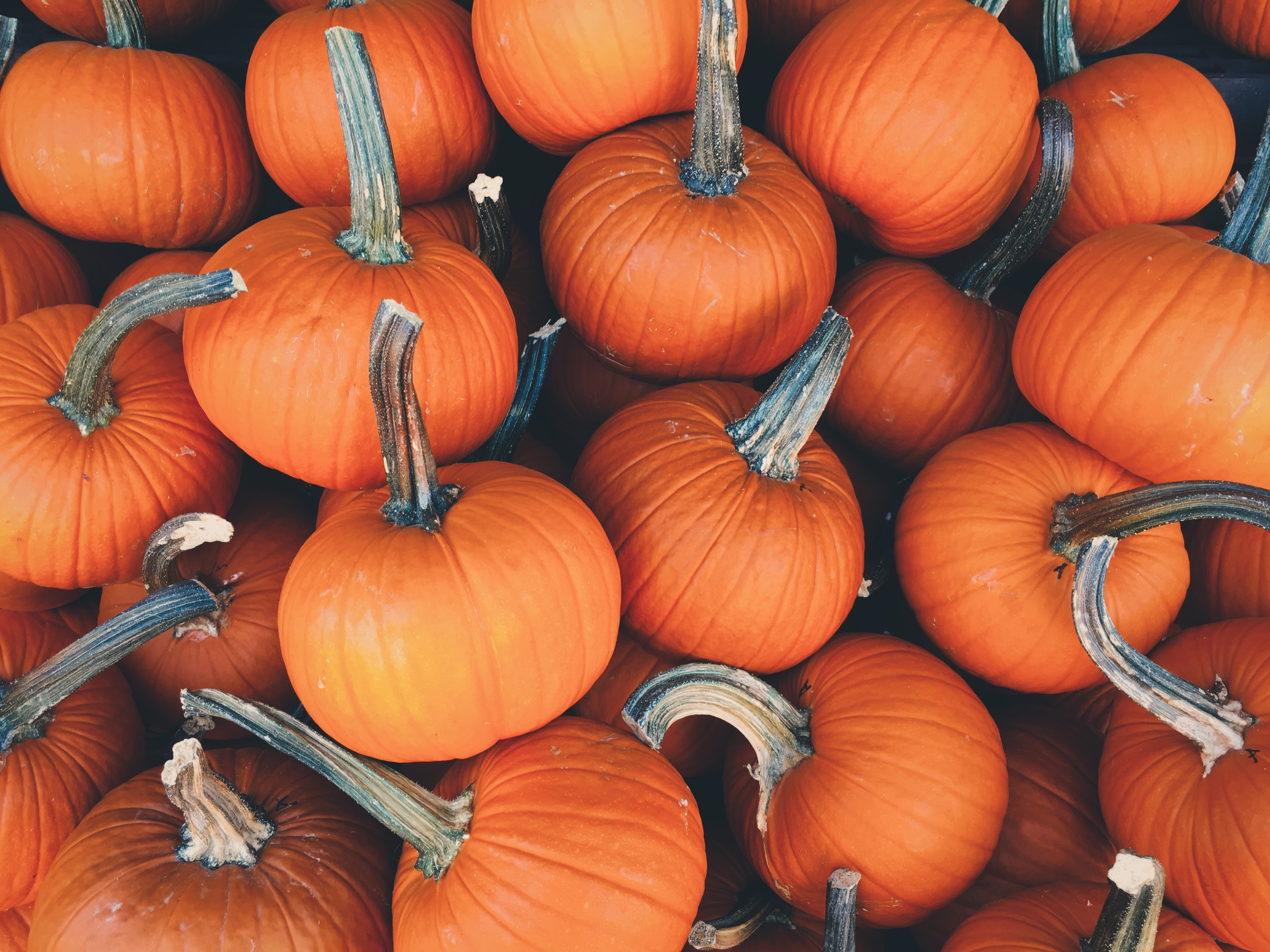 7 Pumpkin Recipes to Cook Up This Fall