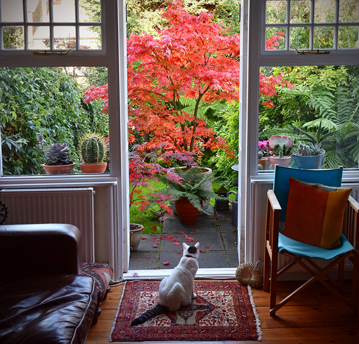 Thinking Ahead-Decorate Your Sofa and Living Room for Fall