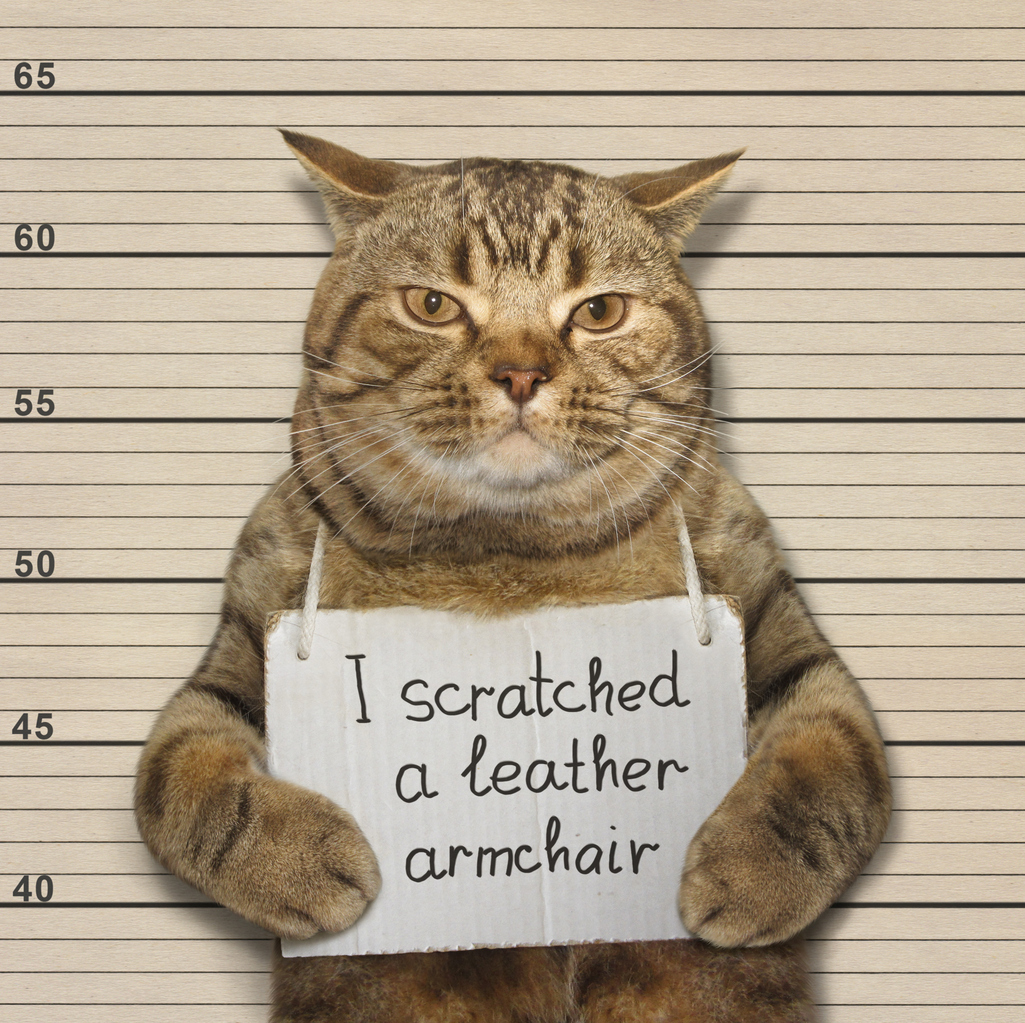 Every Cat Owner Has Been There You Walk Into The Living Room First Thing In Morning And Catch Your Feline Friend Red Pawed Scratching Away At