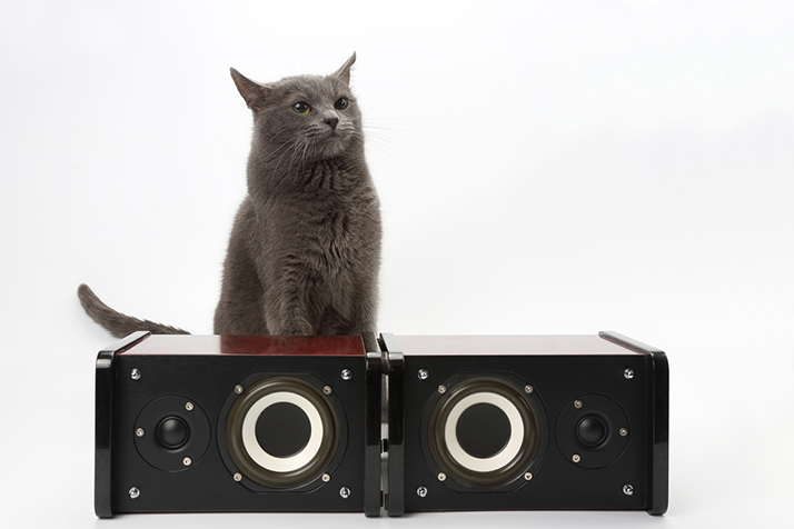 Love Your Speakers? Got a Cat? Here's How to Get Your Cat to Stop Scratching Your Audio Speakers