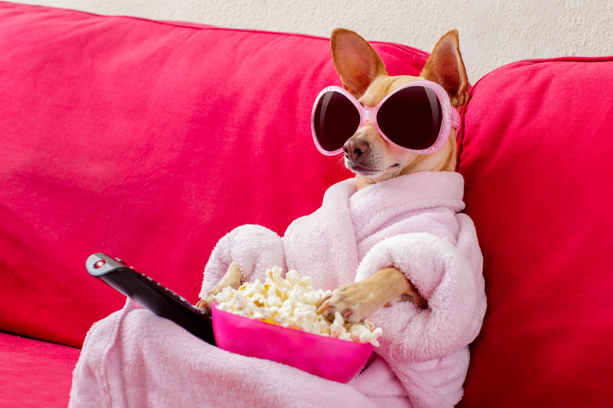 A chihuahua in a pink robe, wearing pink sunglasses, sits on a couch with a remote a pink bowl full of popcorn.