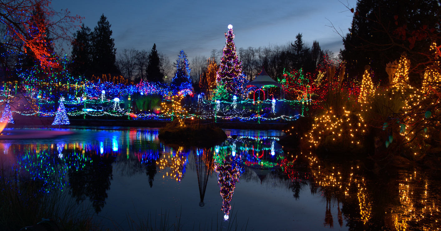 A pond surrounded by Christmas trees covered in colorful lights at dusk.
