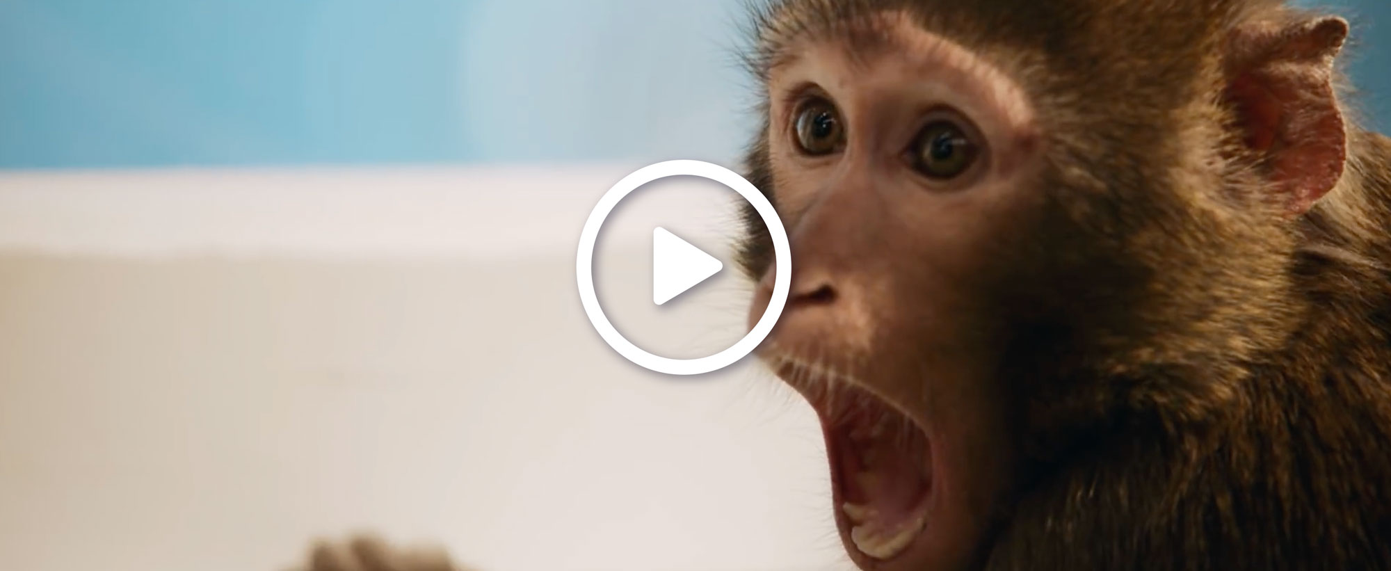 Monkey easy in easy out samsung refrigerator